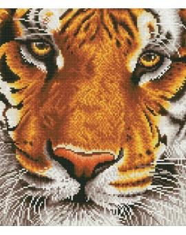 Diamond Dotz Tigre Bengale  N19