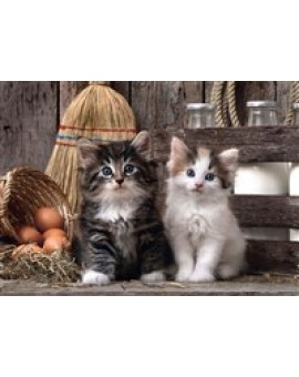 Clem.c.t 1000 Mignons Chatons