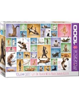 C.T 1000 - Chats yoga