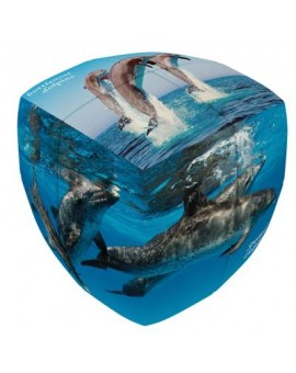 V-cube Dauphin 2X2